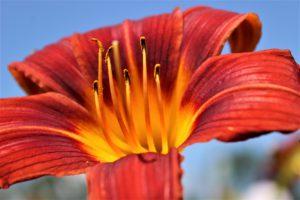 Self Nurture flower by Universal Healings